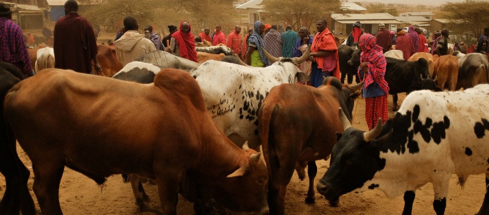 In Search Of The Solution To Farmer Pastoralist Conflicts Tanzania